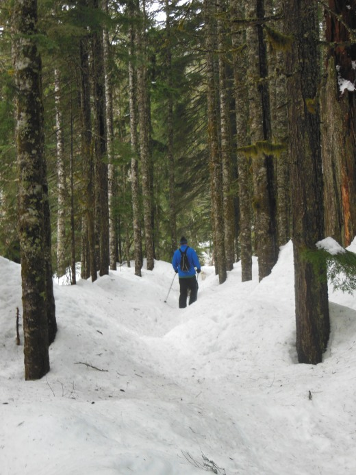 The snowshoers created a perfectly packed level pathway for me to follow through the trees along the stream.