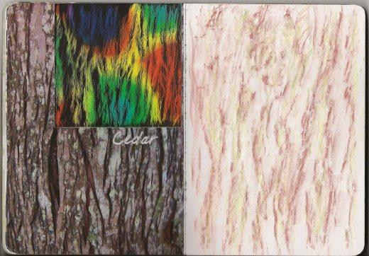 Cedar photo rubbing scratchboard sketch