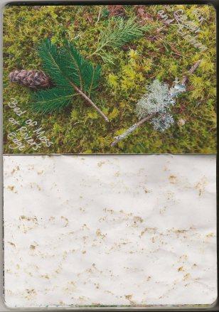 Fir Cedar Lichen Moss