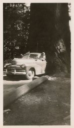 Dad Rollin I think and Aunt Ger - mom's sister- driving through tree-probably Stanley Park Vancouver