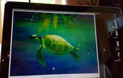 Sample turtle painting